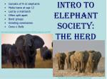 intro to elephant society the herd