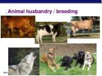 animal husbandry breeding