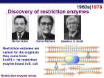 discovery of restriction enzymes