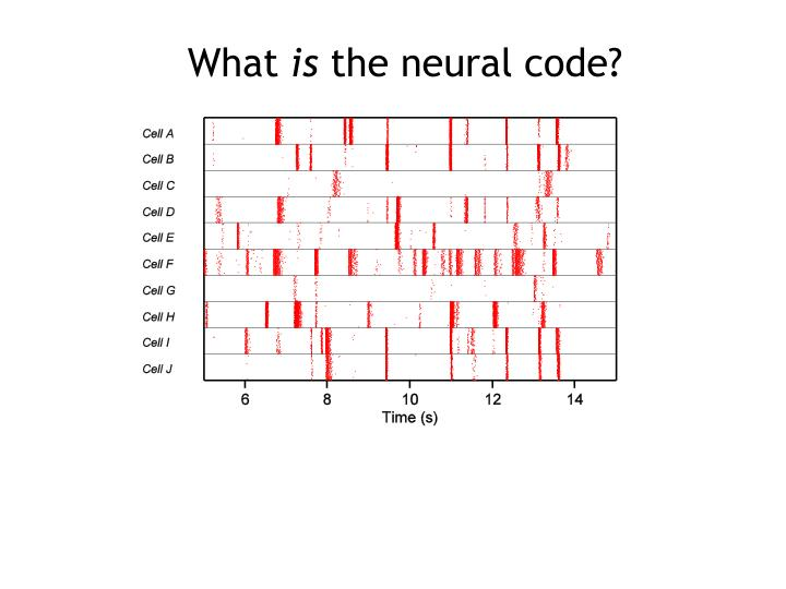 what is the neural code n.