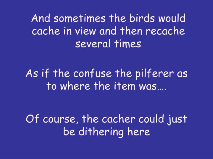 And sometimes the birds would cache in view and then recache several times
