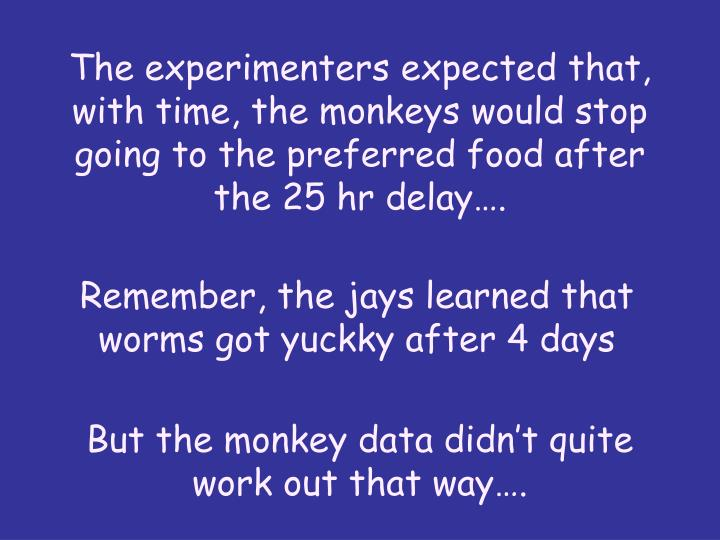 The experimenters expected that, with time, the monkeys would stop going to the preferred food after the 25 hr delay….