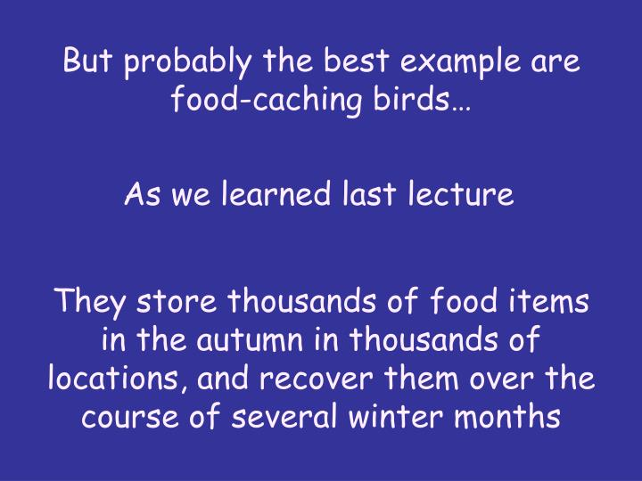 But probably the best example are food-caching birds…