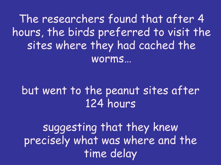 The researchers found that after 4 hours, the birds preferred to visit the sites where they had cached the worms…