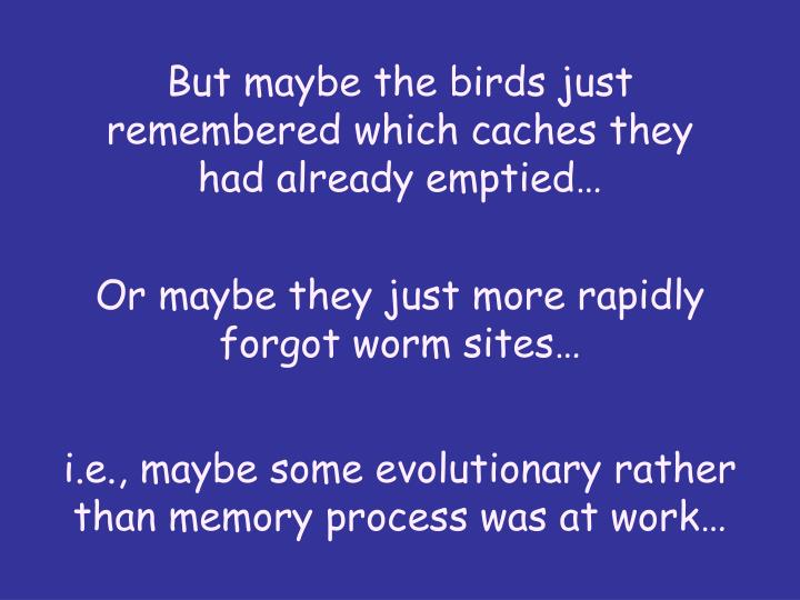 But maybe the birds just remembered which caches they had already emptied…