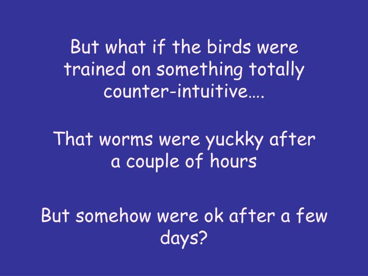 But what if the birds were trained on something totally counter-intuitive….