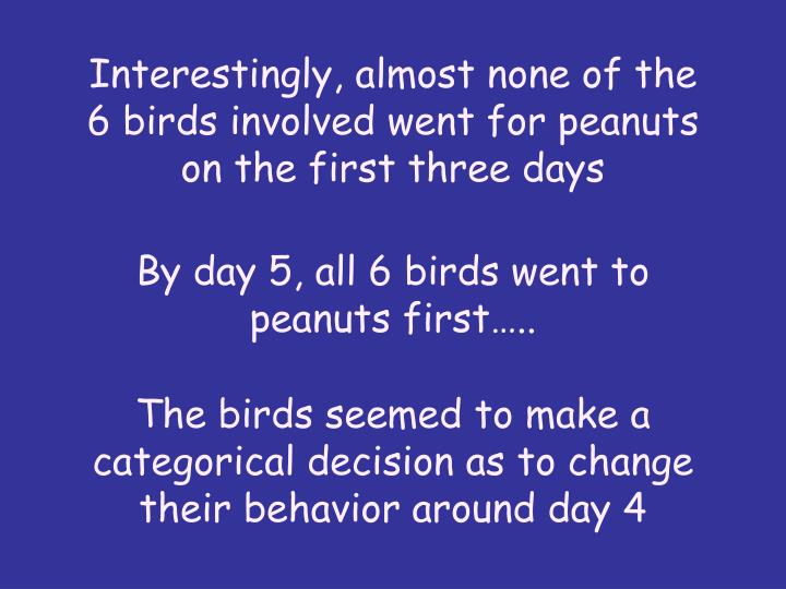 Interestingly, almost none of the 6 birds involved went for peanuts on the first three days