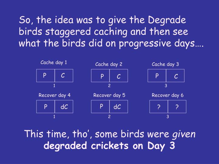 So, the idea was to give the Degrade birds staggered caching and then see what the birds did on progressive days….