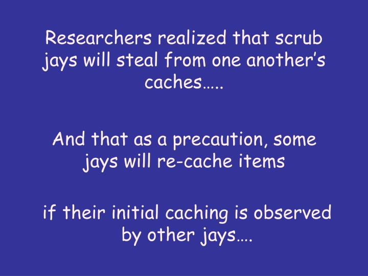 Researchers realized that scrub jays will steal from one another's caches…..