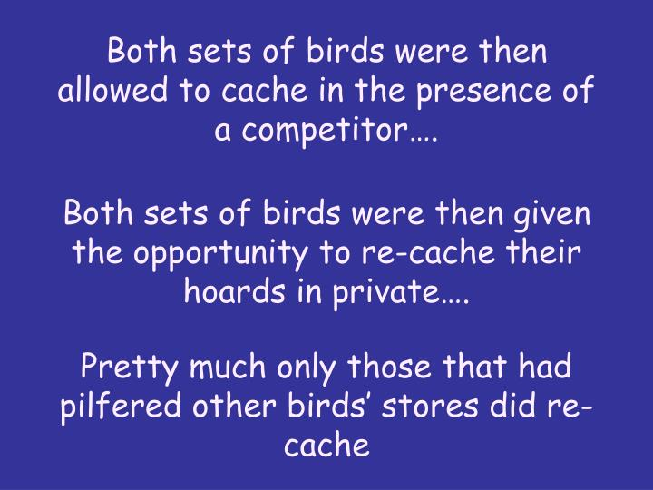 Both sets of birds were then allowed to cache in the presence of a competitor….
