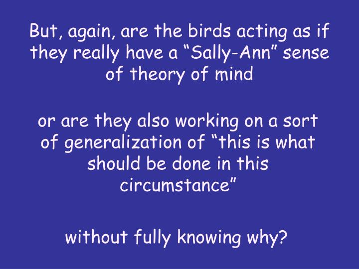 "But, again, are the birds acting as if they really have a ""Sally-Ann"" sense of theory of mind"