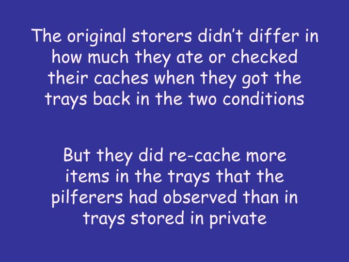 The original storers didn't differ in how much they ate or checked their caches when they got the trays back in the two conditions