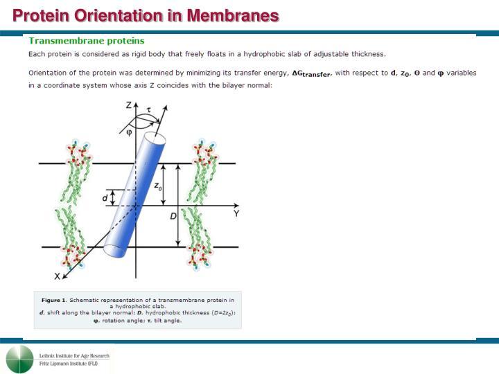 Protein Orientation in