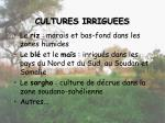 cultures irriguees