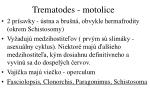 trematodes motolice