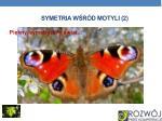 symetria w r d motyli 2