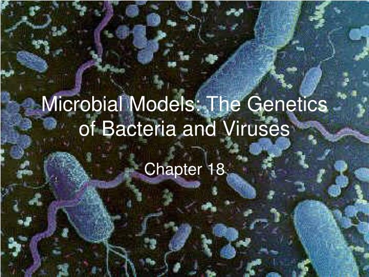 microbial models the genetics of bacteria and viruses n.