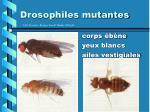 drosophiles mutantes