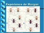 exp rience de morgan1