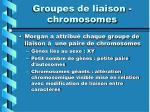 groupes de liaison chromosomes