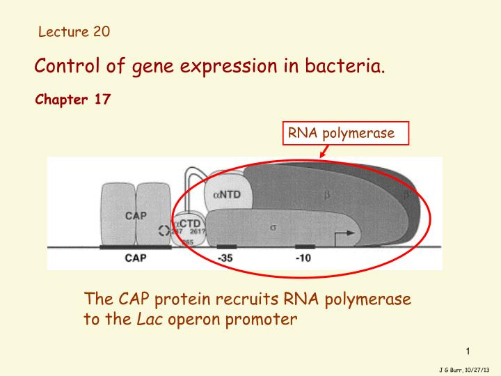 Control of gene expression in bacteria