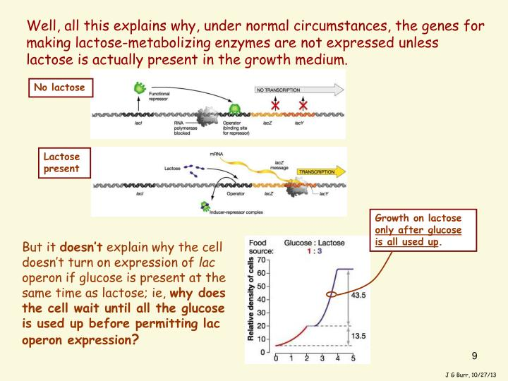 Well, all this explains why, under normal circumstances, the genes for making lactose-metabolizing enzymes are not expressed unless lactose is actually present in the growth medium.