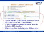 impdh domain structure