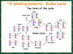 13 c labeling patterns krebs cycle