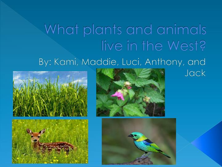 what plants and animals live in the west n.