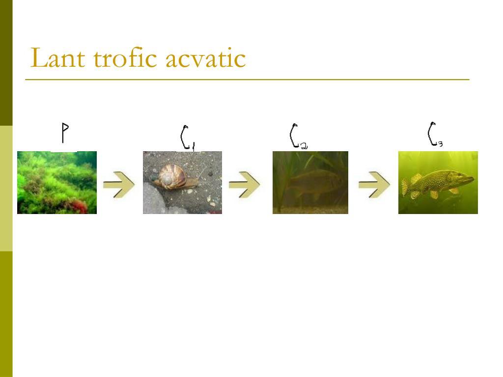 PPT - Relatii trofice in ecosistem e PowerPoint ...