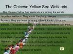 the chinese yellow sea wetlands