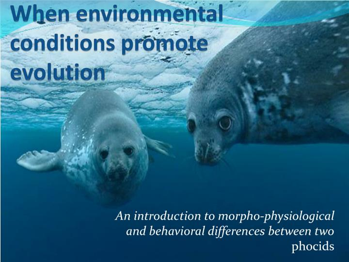 when environmental conditions promote evolution n.