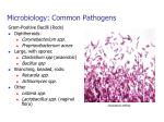 microbiology common pathogens1