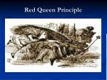 red queen principle