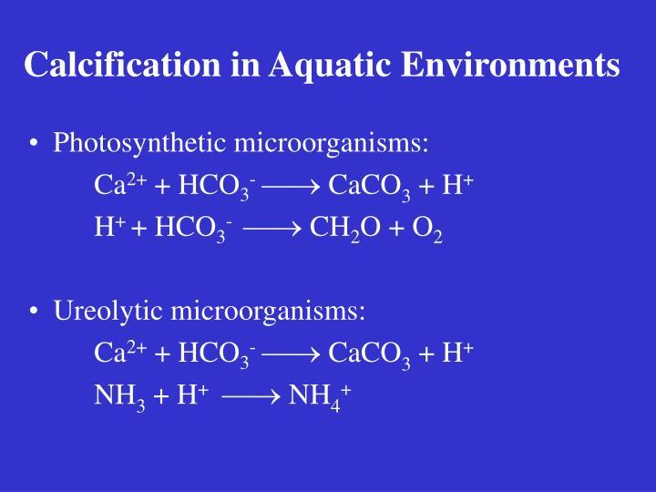 Calcification in Aquatic Environments