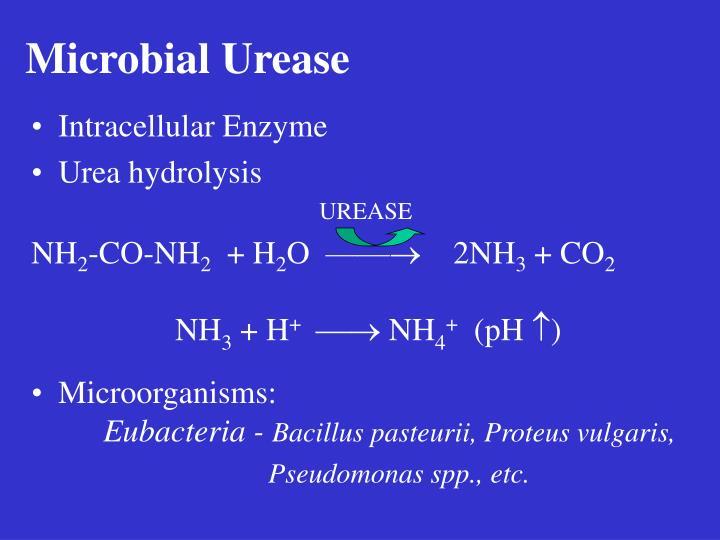 Microbial Urease