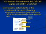 cytoplasmic determinants and cell cell signals in cell differentiation