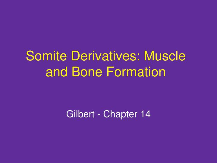 somite derivatives muscle and bone formation n.
