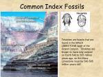 common index fossils