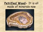 petrified wood it is all made of minerals now