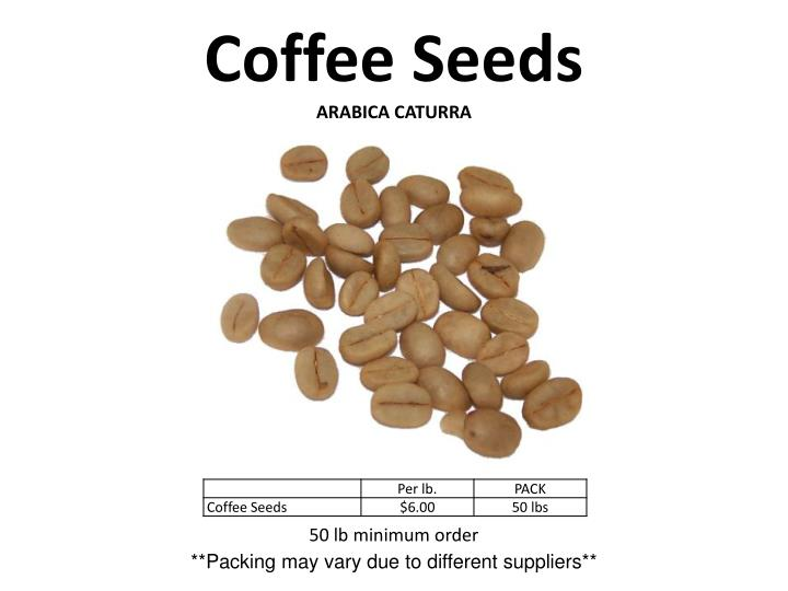 coffee seeds arabica caturra n.