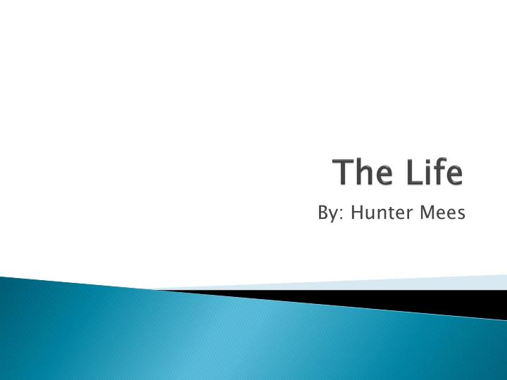 the life n.