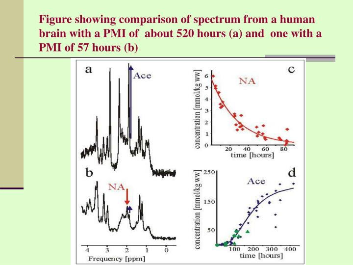 Figure showing comparison of spectrum from a human brain with a PMI of  about 520 hours (a) and  one with a PMI of 57 hours (b)