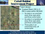 cattail habitat improvement project1