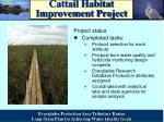 cattail habitat improvement project4