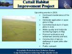 cattail habitat improvement project5