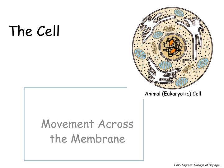 the cell n.
