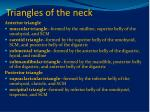 triangles of the neck1