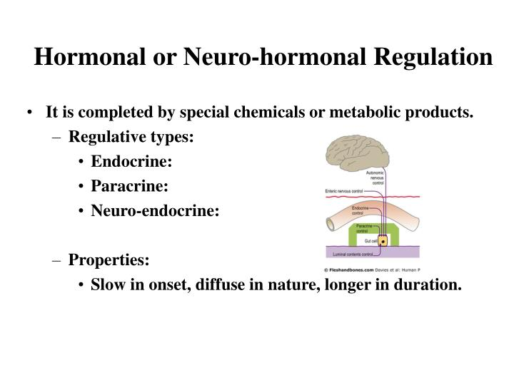 Hormonal or Neuro-hormonal Regulation