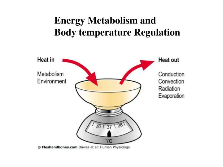 Energy Metabolism and